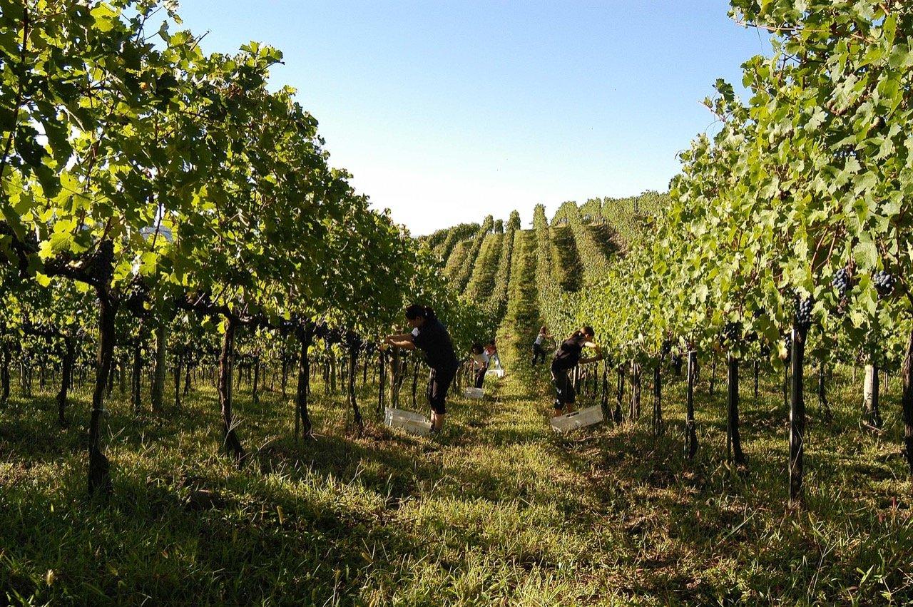 Produção de vinhos no Brasil: conheça 4 fatos importantes
